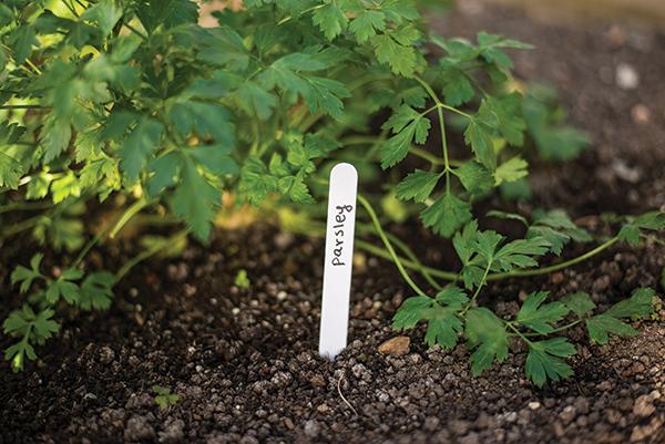 Etiketės augalų žymėjimui 25 vnt.