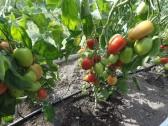 ECO Šiltnamio laistymo rinkinys, iš vandentiekio 40 augalų