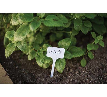 Augalų žymėjimas