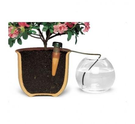 augalų laistymas vazonėliuose