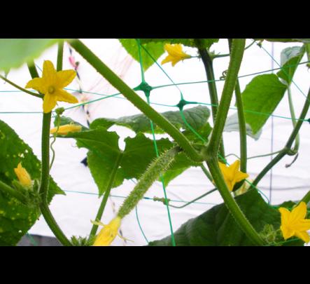 Tinklas vijokliniams augalams 2x20m